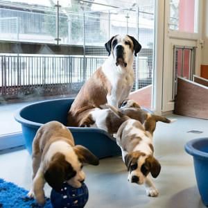 Sette nuovi cuccioli alla Fondazione Barry